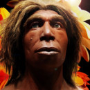 Re-creating a Hominin