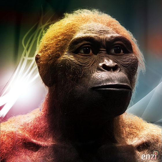 http://www.enzimuseum.org/wp-content/uploads/2011/09/Australopithecus_africanus_560.jpg